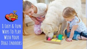 8 Easy & Fun Ways To Play With Your Dogs Indoors